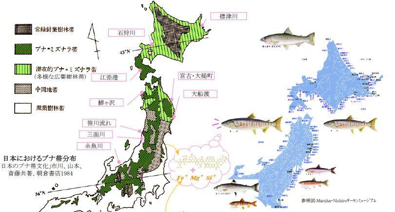日本におけるブナ帯分布
