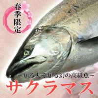 2012sakuramasu_s