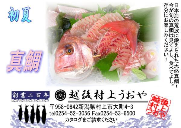 l_madai200805